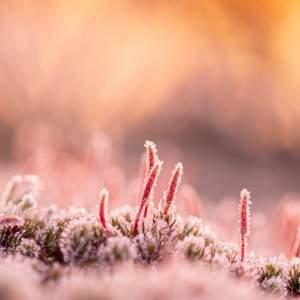 Afbeelding bij Anno Bakker Foto van de maand januari