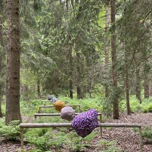 Afbeelding bij Buitenlucht in het Spaarbankbos